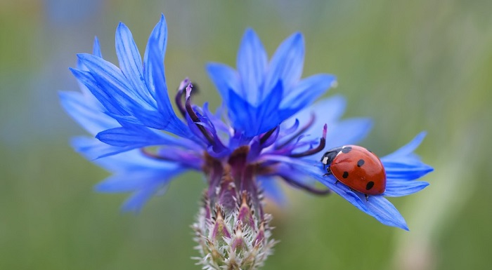 Beetle – Spirit Animal, Symbolism, Totem and Meaning