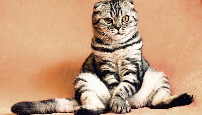 Cat – Spirit Animal, Totem, Symbolism and Meaning