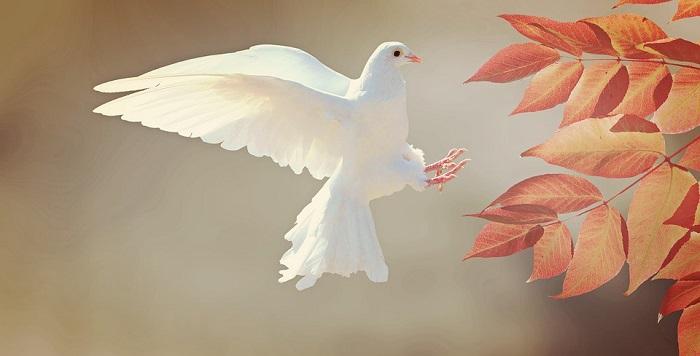 pigeon symbolism