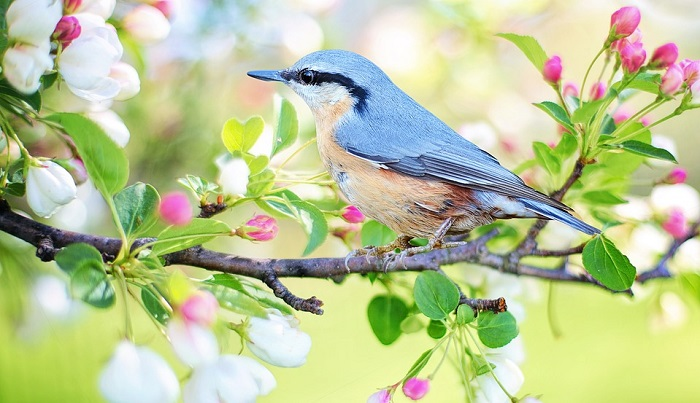 Dreams About Birds – Meaning and Interpretation