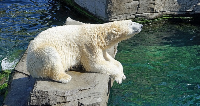 Dreams About Bears Meaning And Interpretation