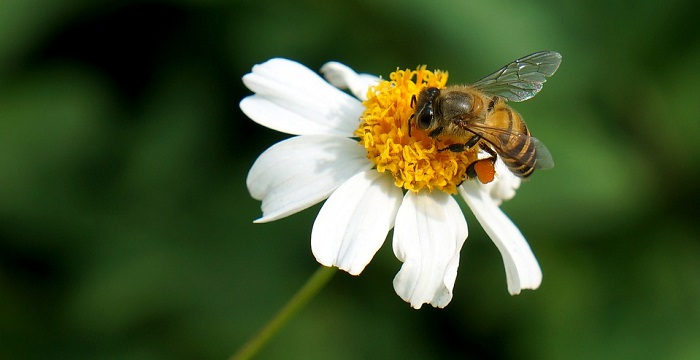 Dreams About Bees Meaning And Interpretation