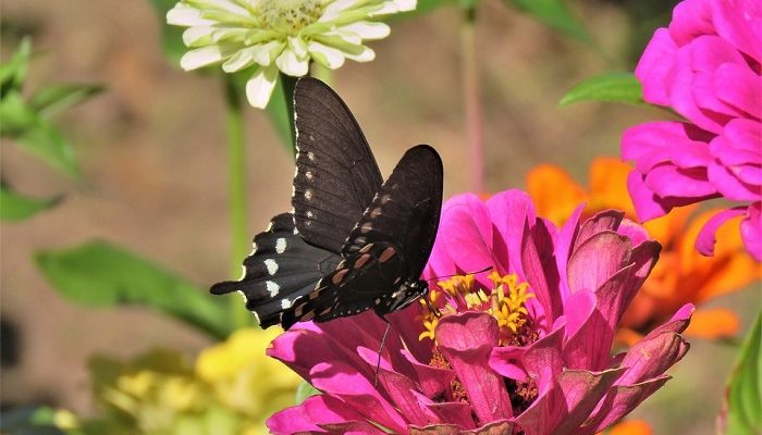 Dreams About Butterflies – Meaning and Interpretation