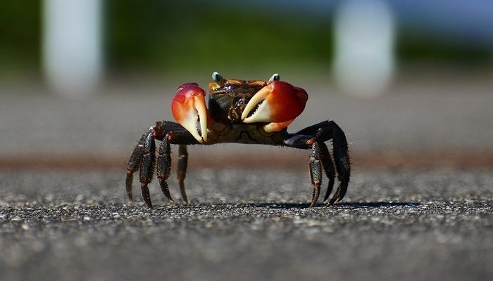 Dreams About Crabs – Meaning and Interpretation