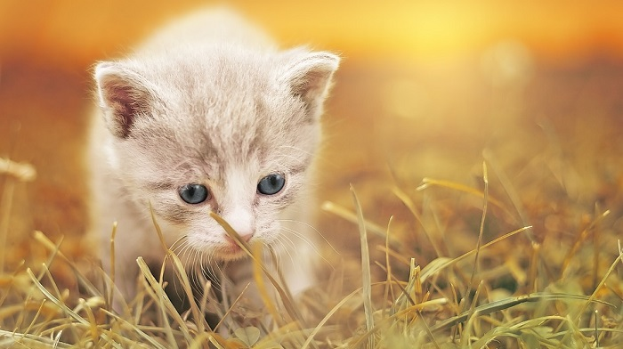 Dreams About Kittens – Meaning and Interpretation