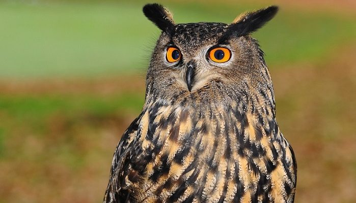 Dreams About Owls Meaning And Interpretation