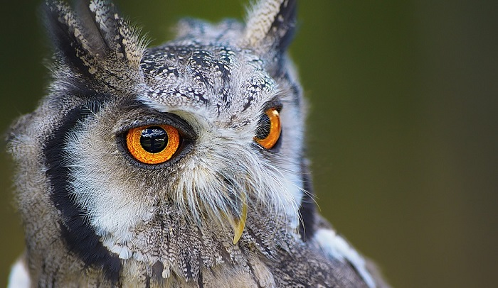 Dreams About Owls – Meaning and Interpretation