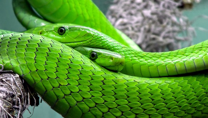 Dreams About Snakes – Interpretation and Meaning