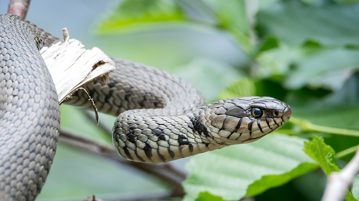 Dreams About Snakes Interpretation And Meaning