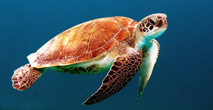 Dreams About Turtles – Meaning and Interpretation