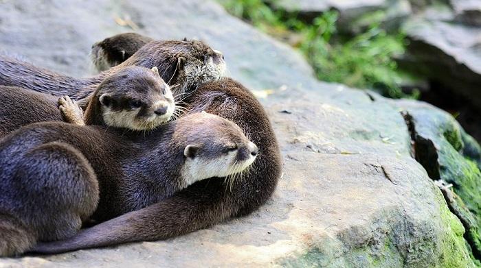 Otter – Spirit Animal, Totem, Symbolism and Meaning