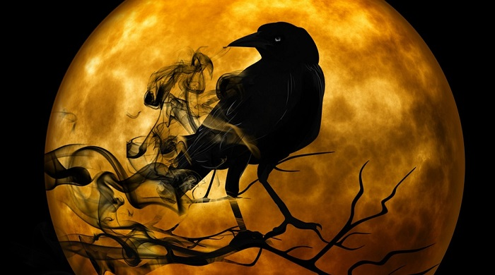 Raven Crow Spirit Animal Totem Symbolism And Meaning