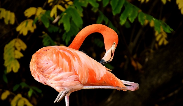 Flamingo Spirit Animal Symbolism Totem And Meaning