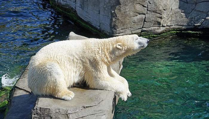 Bear – Spirit Animal, Totem, Symbolism and Meaning