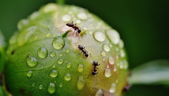 Dreams About Ants Meaning And Interpretation