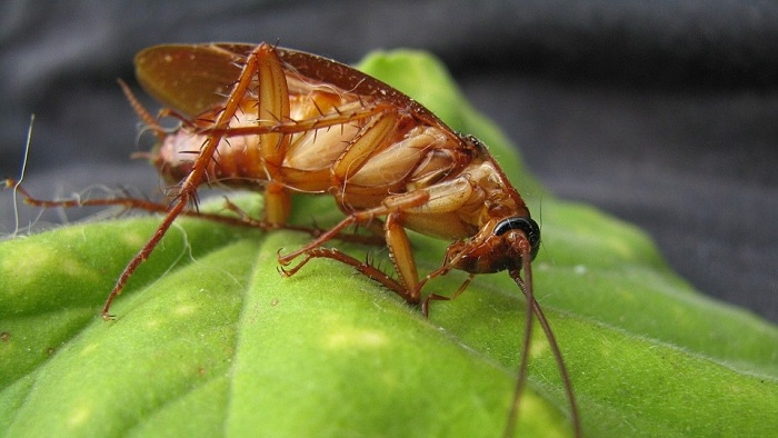 Dreams About Cockroaches – Meaning and Interpretation