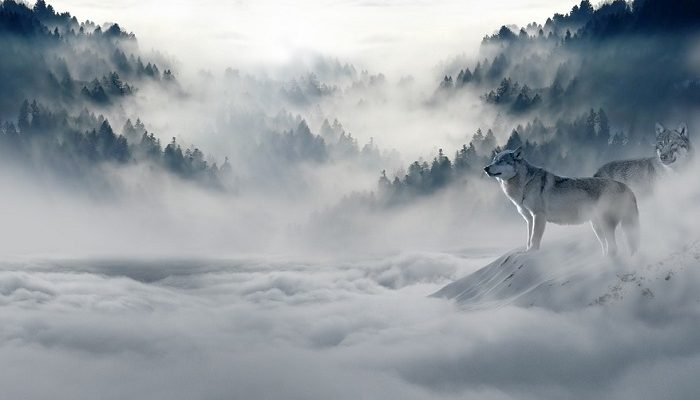 Dreams About Wolves – Meaning and Interpretation