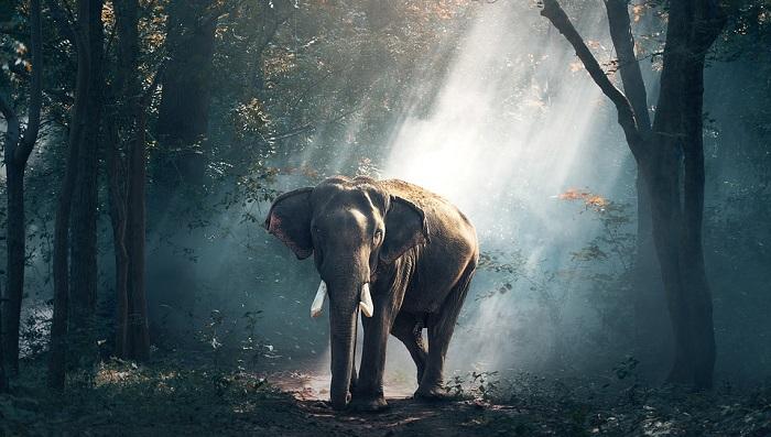 Elephant Spirit Animal Totem Symbolism And Meaning