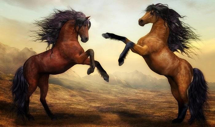 Horse Spirit Animal Totem Symbolism And Meaning