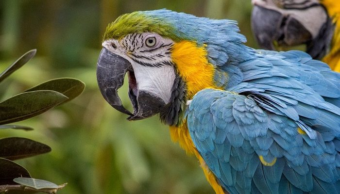 Parrot Spirit Animal Totem Symbolism And Meaning