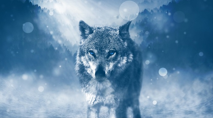 Wolf Spirit Animal Totem Symbolism And Meaning