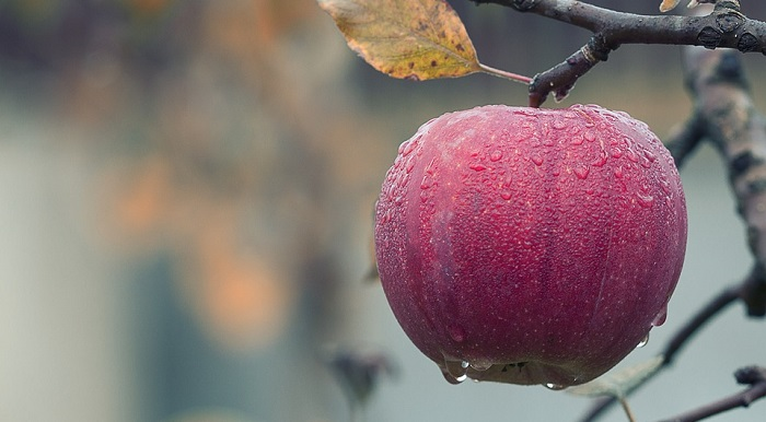 Dreams About Apple – Meaning and Interpretation