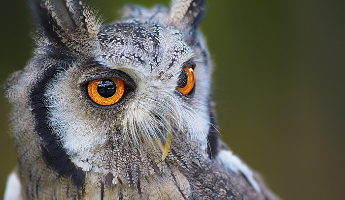 Owl Spirit Animal Totem Symbolism And Meaning