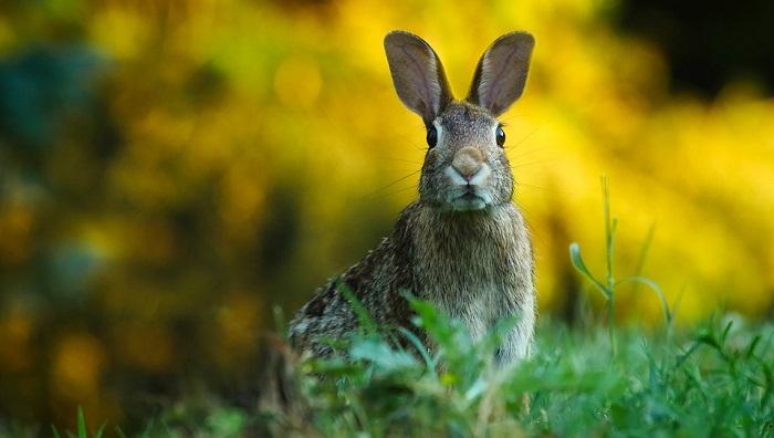 Résultats de recherche d'images pour «rabbit totem»