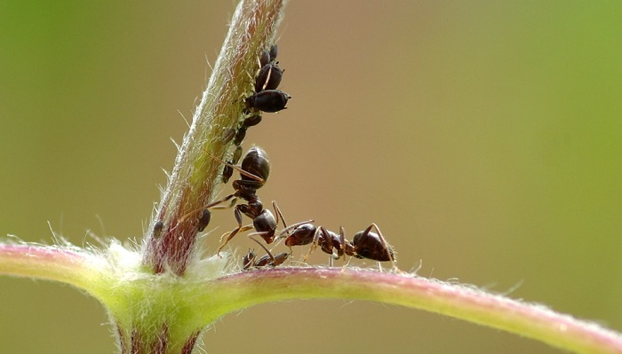 Biblical Meaning of Ants in Dreams – Interpretation and Meaning