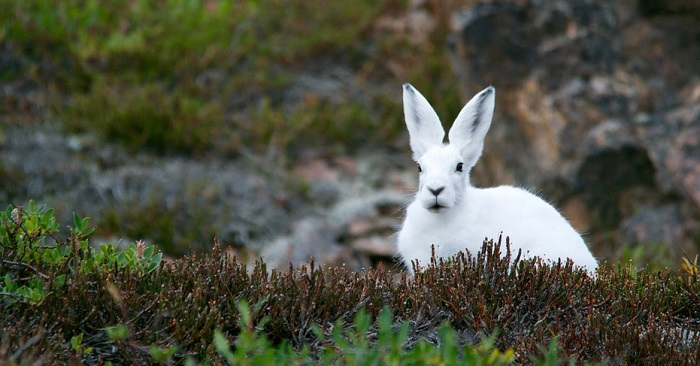 Biblical Meaning Of Rabbits In Dreams Interpretation And Meaning