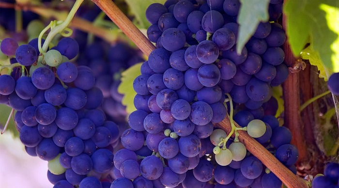 Biblical Meaning Of Grapes In Dreams Interpretation And Meaning