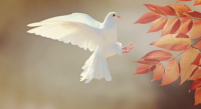 Spiritual Meaning of Birds Flying In Front of You and Around You
