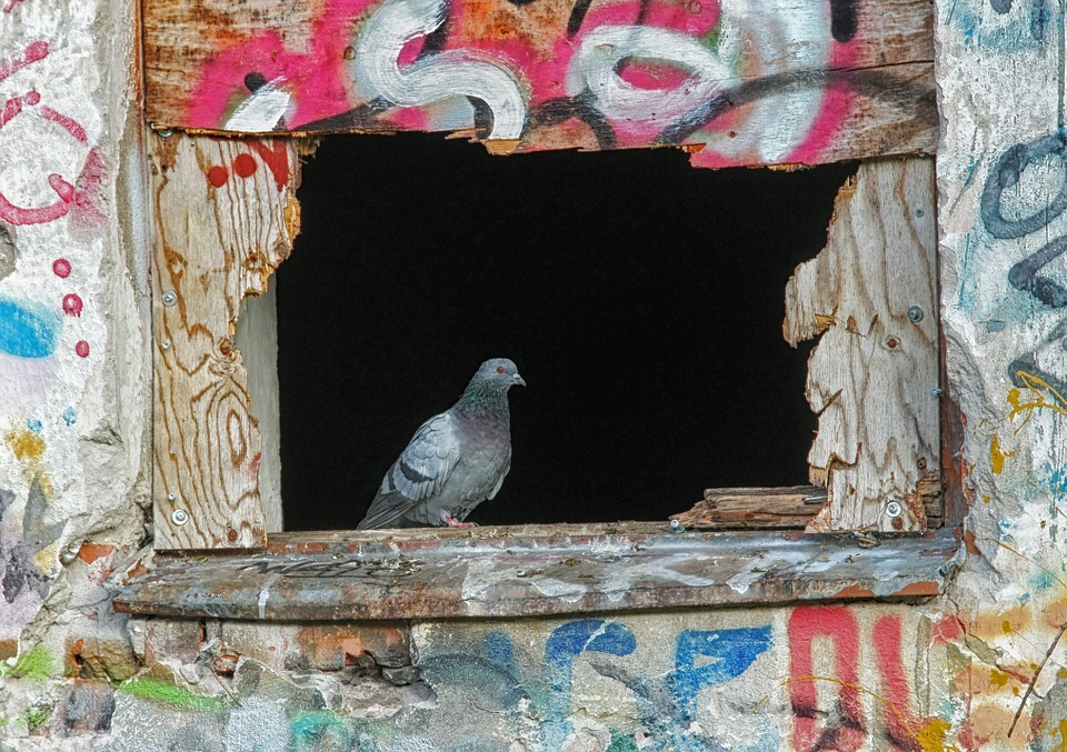 Spiritual Meaning of Birds Hitting Window