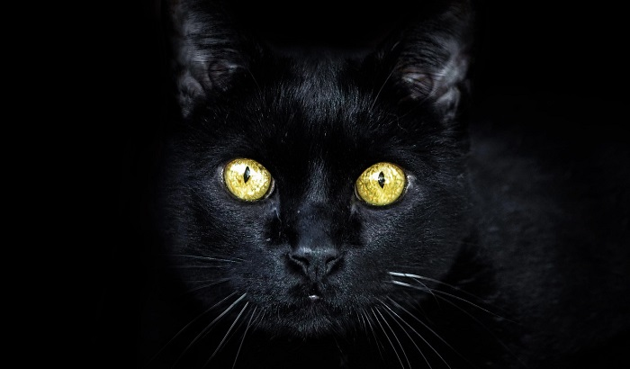Black Cat in a Dream – Meaning and Symbolism