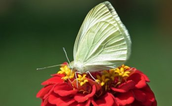 Orange Butterfly – Meaning and Symbolism